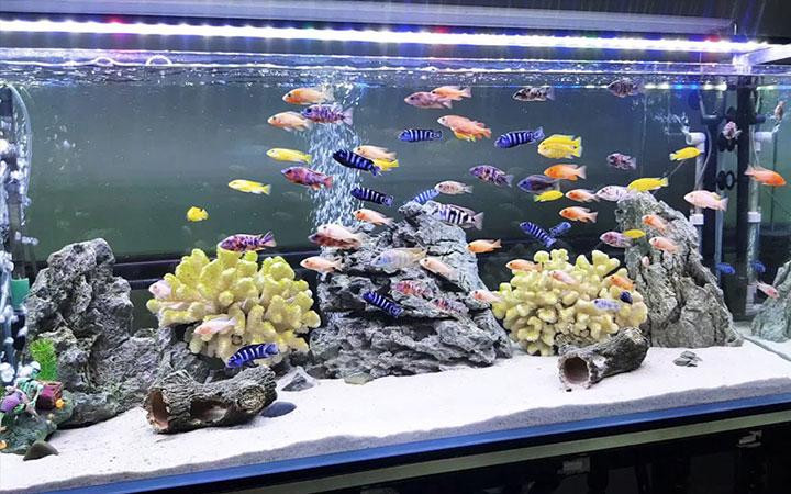 Vì sao phải xử lý nước hồ cá