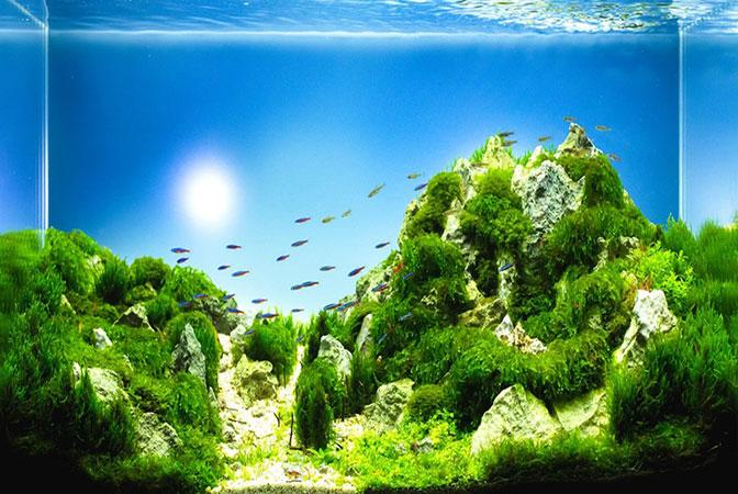 Những cách làm nước bể cá trong vắt đơn giản và hiệu quả