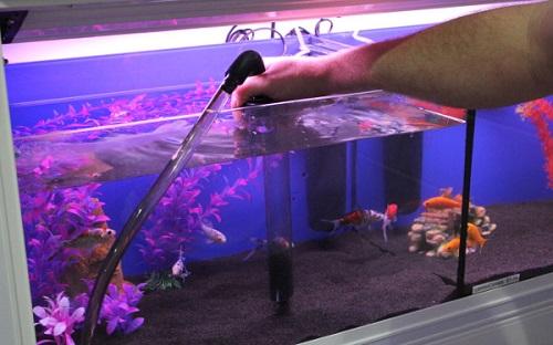 Cách xử lý nước hồ cá bị xanh cực kỳ đơn giản và hiệu quả