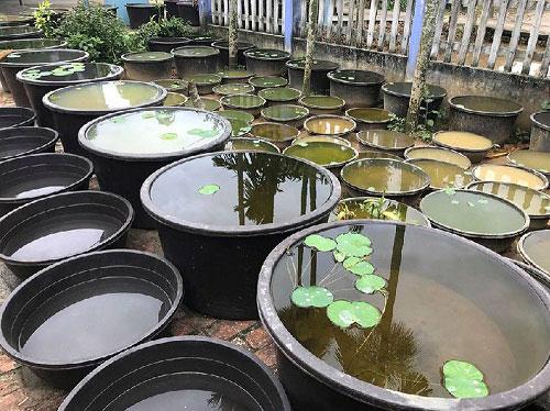 Cách xử lý nước máy để nuôi cá cảnh