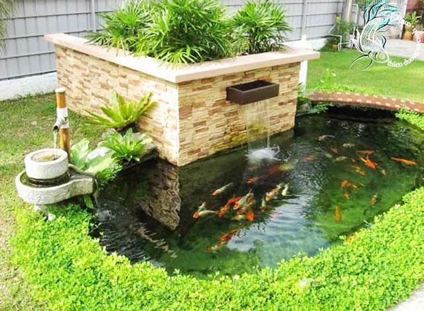 Cách nuôi cá cảnh trong bể xi măng