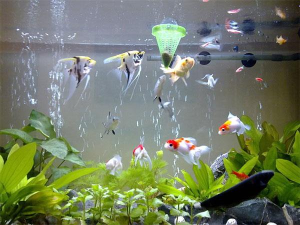 Cách tạo oxy cho bể cá nhỏ