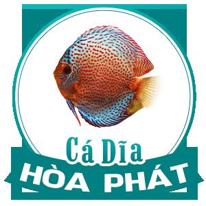 Cá Dĩa Hòa Phát